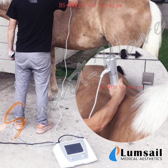 Equine Use Veterinary Shockwave Therapy Equipment Smartwave BS-SWT2X